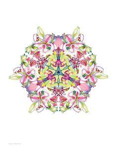 Stargazer Mandala Unmatted Print. $20.00, via Etsy.