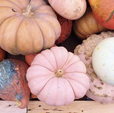 Setting the Thanksgiving Table - Thanksgiving Wallpaper Pink Pumpkins, Fall Pumpkins, Fall Wallpaper, Pink Wallpaper, Fall Table, Thanksgiving Table, Thanksgiving Wallpaper, Autumn Aesthetic, Hello Autumn