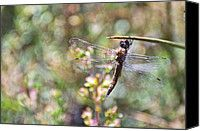 Dragonfly photo art print by Jean Booth.