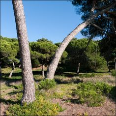 // Untitled  // Lagoa de Albufeira, Portugal // 20 October 2012  // 100x100cm // Inkjet print (Epson UltraChrome K3 pigmented ink on Hahnemuhle Photo Rag paper) // Edition of 3 + 1AP    // José De Almeida photography  // http://www.josedealmeida.com/
