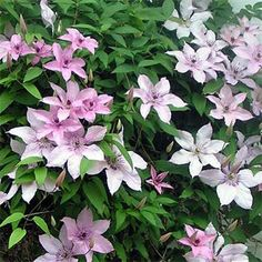Garden Cafe, Garden Pots, Garden Ideas, Bulb Flowers, Flower Pots, Climbing Clematis, Garden Centre, Chelsea Flower Show, Grow Your Own