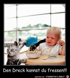 You eat it. Tierischer Humor, Funny Cats, Funny Animals, Book Gif, Animal Humour, Funny Memes, Jokes, Funny Cat Pictures, Crazy Cats