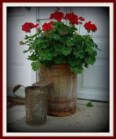 Barrel Planter. I would stain the barrel using an ebony stain and fill it with red geraniums like the picture.  The contrast would be awesome!
