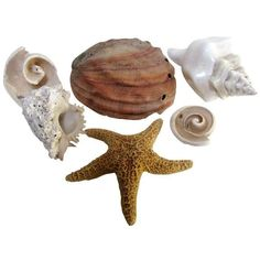 Coastal Collection Sea Shells Shell ($95) ❤ liked on Polyvore featuring home, home decor, fillers, decorative objects, seashell home decor and coastal home decor