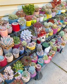 Succulent Gardening, Cacti And Succulents, Planting Succulents, Cactus Plants, Garden Plants, Indoor Plants, Different Plants, Dream Garden, Flower Wall