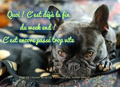 C'est déjà la fin du week end! Bon Weekend, Bon Week End Image, Amour Éternel, French Bulldog, Images, Dogs, Alcohol Intoxication, Dog Baby, Nice Quotes