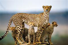 © Eberhard Brunner, Nature's Best Photography Awards - Cheetahs, Masai Mara, Kenya