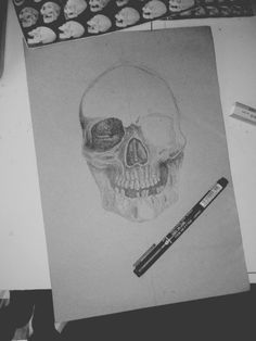 Sketch and detail skull