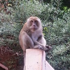 Monkey everywhere..evil