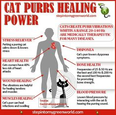 ❤ cats purr
