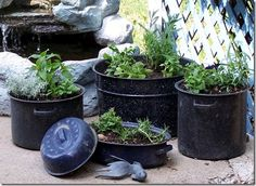 Vintage enamelware containers planted with herbs.