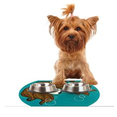 Kess InHouse Jaidyn Erickson 'Goldfish' Feeding Mat for Pet Bowl, 18 by 13-Inch -- Read more at the image link. (This is an affiliate link and I receive a commission for the sales) #Kitty