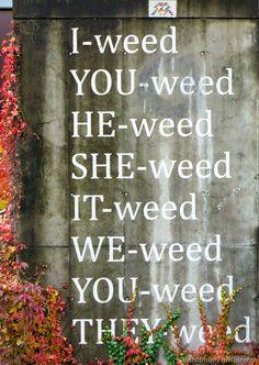 Weed. MQ Wien.