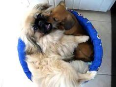 Amor Canino - dividindo a cama