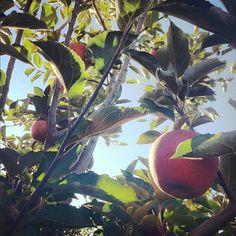 MMMM... Lynd's Fruit Farm in #Pataskala