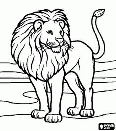 lion in a desert landscape coloring page