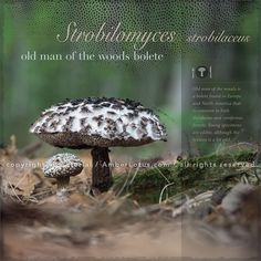 The Miraculous Mushroom 2017 Wall Calendar: With Fabulous Fungi Facts by Marianna Armata. Click through to see the most recent edition!