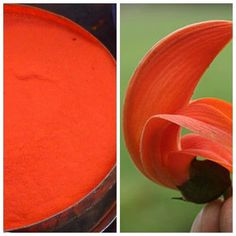 saffron orange homemade holi powder recipe