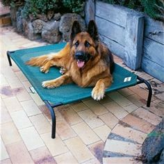 Large Elevated Indoor/Outdoor Dog Cot in Brunswick Green