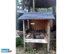 Outdoor Rabbit/Animal Cages (2) 2 Outdoor Rabbit cages for sale $50 ea. rails for waste pan (pan not included) top lifts for easy access, front door, shingle roof measure living ...