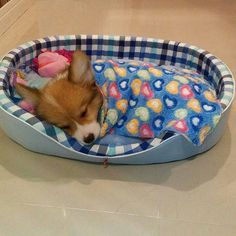 Sweet dreams little corgi! Sweet dreams little corgi! Cute Baby Animals, Animals And Pets, Funny Animals, Wild Animals, Corgi Dog, Dog Cat, Baby Corgi, Cute Corgi Puppy, Cutest Puppy
