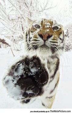 Hey You There, High Five