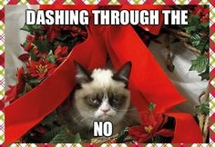 Grumpy cat frowns on your shenanigans. Grumpy cat is not impressed. I wonder if grumpy cat is an engineer. I did find some Grumpy Cat gifs: Grumpy Cat say \ Grumpy Cat Christmas, Christmas Humor, Merry Christmas, Christmas Stuff, Christmas Vacation, Christmas Quotes, Christmas Holidays, Christmas Sock, Christmas Feeling