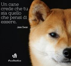 Un cane crede che tu sia quello che pensi di essere (Jane Swan) #aforismi #citazioni #sceltaetica