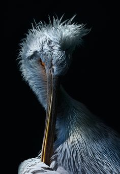 "rhubarbes: ""Birds_ZOO on Behance by david drbal "" Cool Pictures, Creatures, Behance, Scene, Birds, Animals, Image, David, Heavenly"