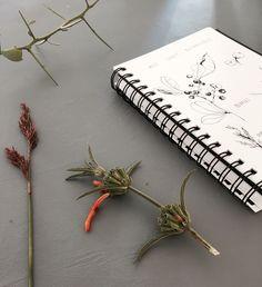 West Coast botanical sketches www.clothandprint.com