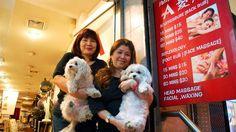 MASSASJE: Små og store massasjesjapper ligger i gatene rundt Canal Street i Chinatown. Julia (t.v.) og Amy Sak masserer i Amys Hair Salon. De to små hundene fungerer som vaktbikkjer.