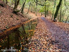 Wooden Seat by the Footpath through Skipton Castle Woods in Autumn Skipton North Yorkshire England