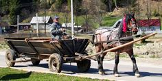 The purebred is a Romanian part-bred Hutzel (Huzel) with infusion of draught horse . Horse Wagon, Horse Drawn Wagon, Horse Tack, All Horse Breeds, Different Horse Breeds, All The Pretty Horses, Beautiful Horses, Rare Horses, Names Of Artists