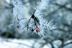 Sharp frost   by Siniirr Frost, Kitty, Winter, Flowers, Plants, Little Kitty, Winter Time, Kitty Cats, Kitten