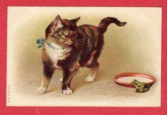 CAT Kitten looking at FROG Dorothy Travers Pope Vintage POSTCARD