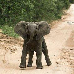 lovely baby..!! Credit : @tselanatravel - @wildtography . #elephant #elephants #elephantlove