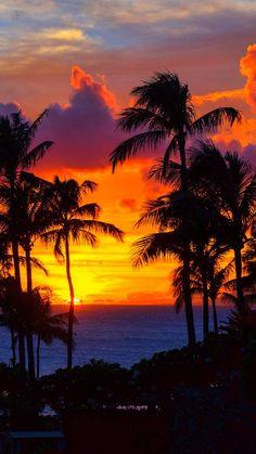 How To Take Amazing Sunset Photos. Summer Wallpaper, Beach Wallpaper, Tree Wallpaper, Wallpaper Backgrounds, Autumn Photography, Sunset Photography, Sunset Pictures, Nature Pictures, Aesthetic Backgrounds