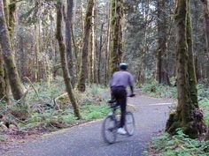 This used to be my walk to campus from my apartment. - The Evergreen State College
