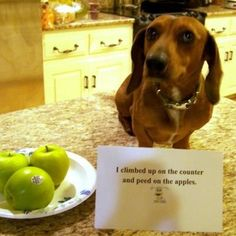 I climbed up the counter and peed on the apples..