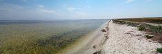 Кінбурнський півострів. Парадокси заповідного півдня   Україна Інкогніта
