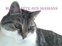 Fête des mamans Cats, Animals, Holidays, Happy Name Day, Gatos, Animales, Animaux, Animal, Cat