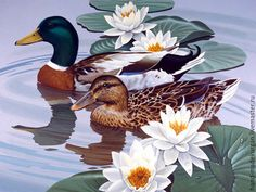 Mallards by John Sloane; to be exact. We humans can LEARN a lesson; Birds Mate For Life. Duck Pictures, Mosaic Pictures, Wildlife Paintings, Wildlife Art, Duck Art, Cross Paintings, Mallard, Bird Art, American Artists