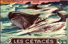 cétacés 5 by pilllpat (agence eureka), via Flickr