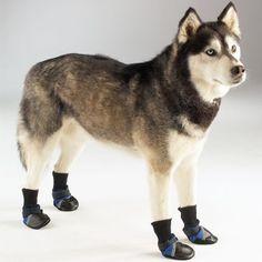 ¿Debo ponerle abrigo y botas a mi perro? http://blog.theyellowpet.es/ponerle-abrigo-perro/
