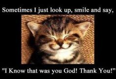 "Happy kitty ~ Sometimes I just look up, smile and say, ""I KNOW that was You, God! Thank You!"""