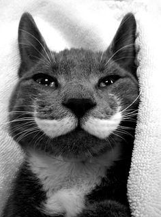Cat of the Day.. complete with moustache! ≧^◡^≦ ☚