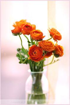 Wedding Table Arrangement Centerpiece Flowers   Orange Ranunculus   Fall Wedding