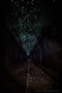 Helensburgh Metropolitan Tunnel glowworms
