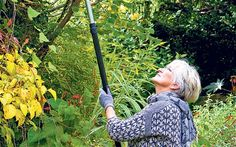 Thorny problems: what are the best pruning tools?