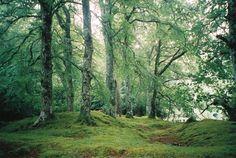 Forest by Sheckler05.deviantart.com